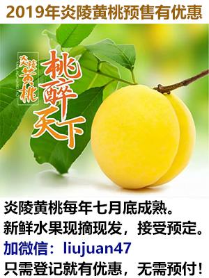 炎陵黄桃预售广告