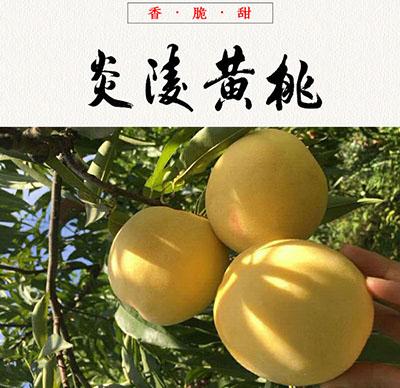 炎陵黄桃产品信息
