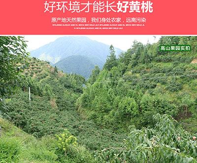 刘氏果园炎陵黄桃风景图