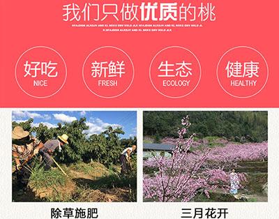 炎陵黄桃种植过程图1