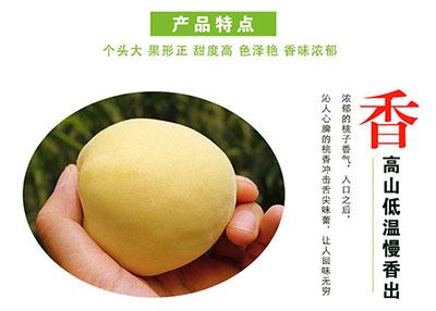 炎陵黄桃产品特点:香