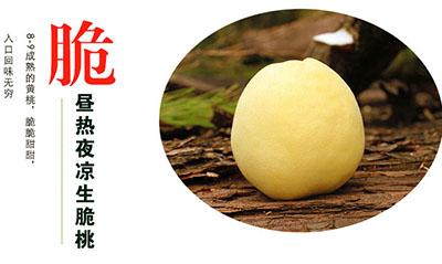 炎陵黄桃产品特点:脆