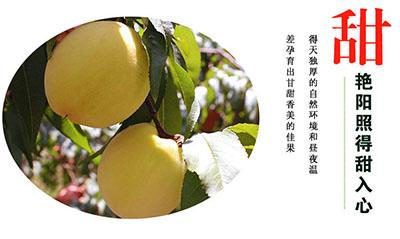 炎陵黄桃产品特点:甜