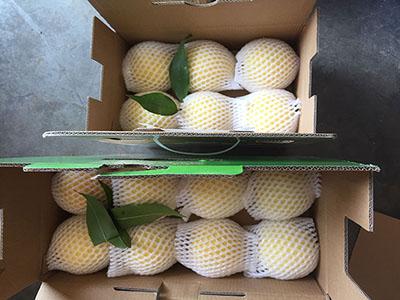 炎陵黄桃包装箱图片