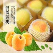 嘉善锦绣黄桃好吃吗,嘉善黃桃多少钱一斤