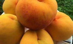 自制黄桃罐头的做法,制作黄桃罐头的方法