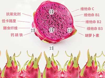 火龙果营养图片
