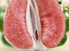 吃柚子能减肥吗,晚饭只吃柚子能减肥吗