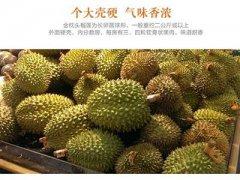 一个榴莲大概多少钱,中国哪里的榴莲最便宜