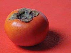 脆柿子的功效与作用,脆柿和柿子的区别