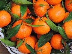经期可以吃橘子吗,月经期吃什么好