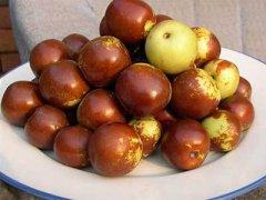 冬枣和红枣的区别,咳嗽能吃冬枣吗