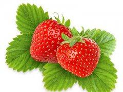 草莓的营养价值与食用功效