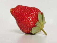 草莓的功效与作用及禁忌