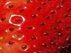 草莓种子在哪里买,草莓种子多少钱一斤
