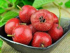 红果是山楂吗,红果和山楂的区别