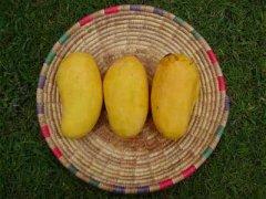 吃芒果过敏怎么办,吃芒果过敏的症状