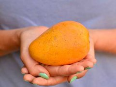 芒果不能和什么一起吃,芒果吃多了会怎么样