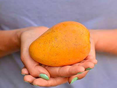 大芒果图片