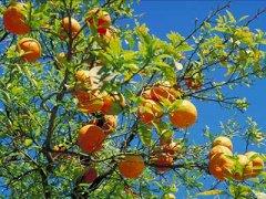 橙子是热性还是凉性,橙子上火吗