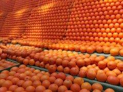 江西橙子多少钱一斤,江西橙子好不好吃