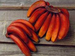 红香蕉和普通香蕉的区别,红香蕉孕妇可以吃吗