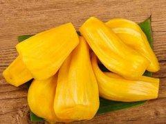 菠萝蜜的营养价值,菠萝蜜的热量