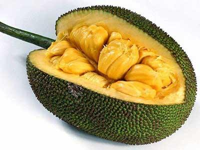 菠萝蜜图片