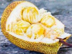 菠萝蜜的功效与作用及禁忌