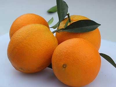 奉节脐橙图片