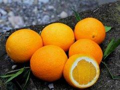 奉节脐橙多少钱一斤,奉节脐橙什么时候成熟