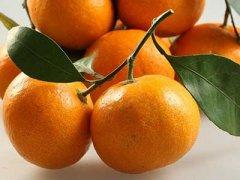 芦柑的功效与作用,芦柑的食用禁忌
