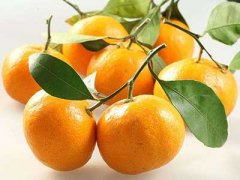 如何挑选芦柑,芦柑哪里的好,芦柑是橙子吗