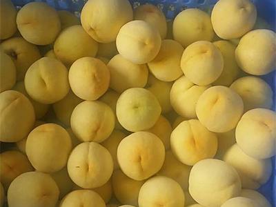 炎陵黄桃营养价值