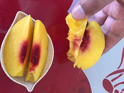 炎陵黄桃产地在哪里 炎陵黄桃是哪里的